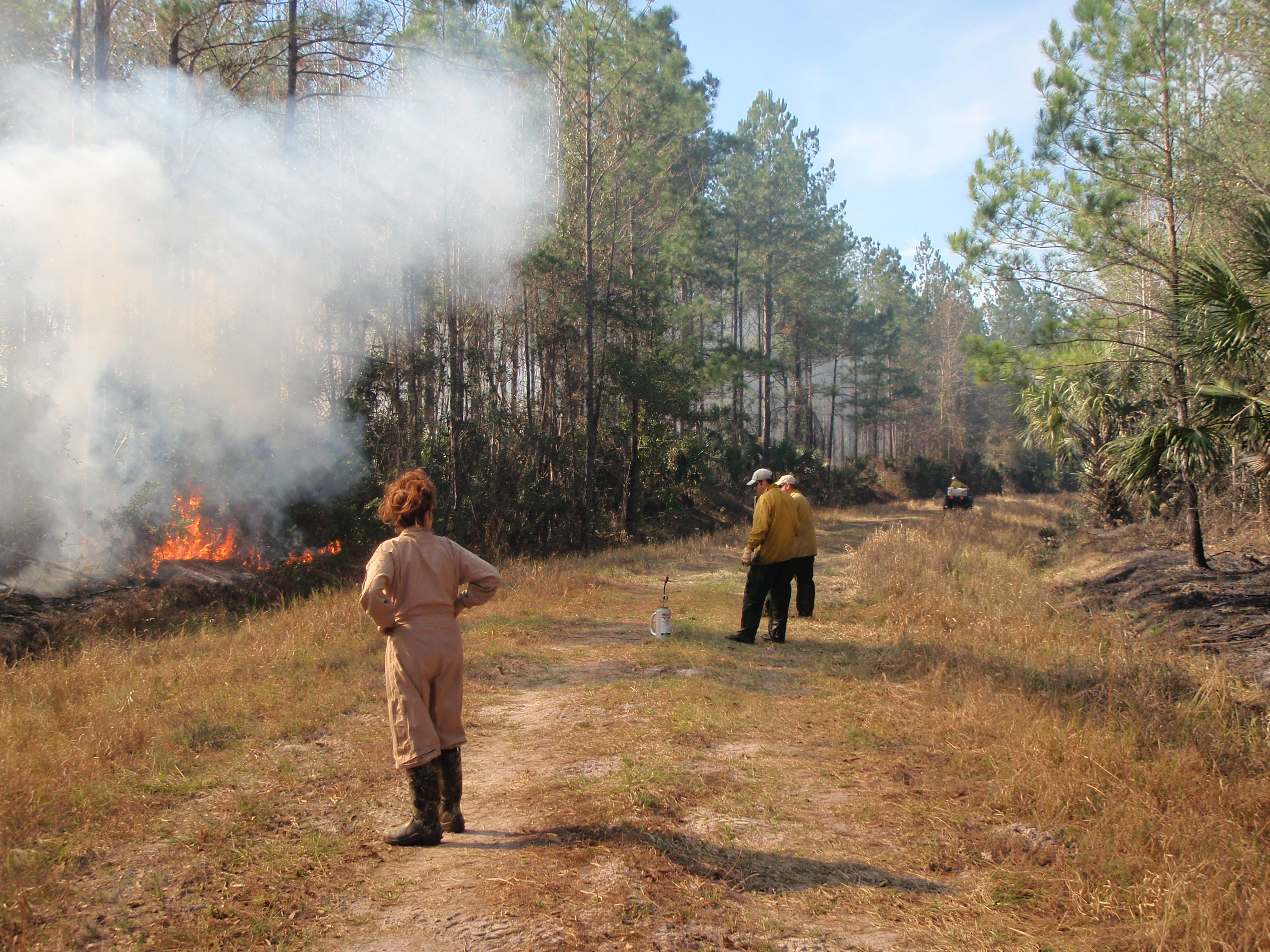 A 2015 prescribed burn in a 22 year old first thinned pine stand. This is a fuel reduction burn conducted in the winter preparatory to in ensuing years conducting growing season burns which will mimic the natural fire cycle.