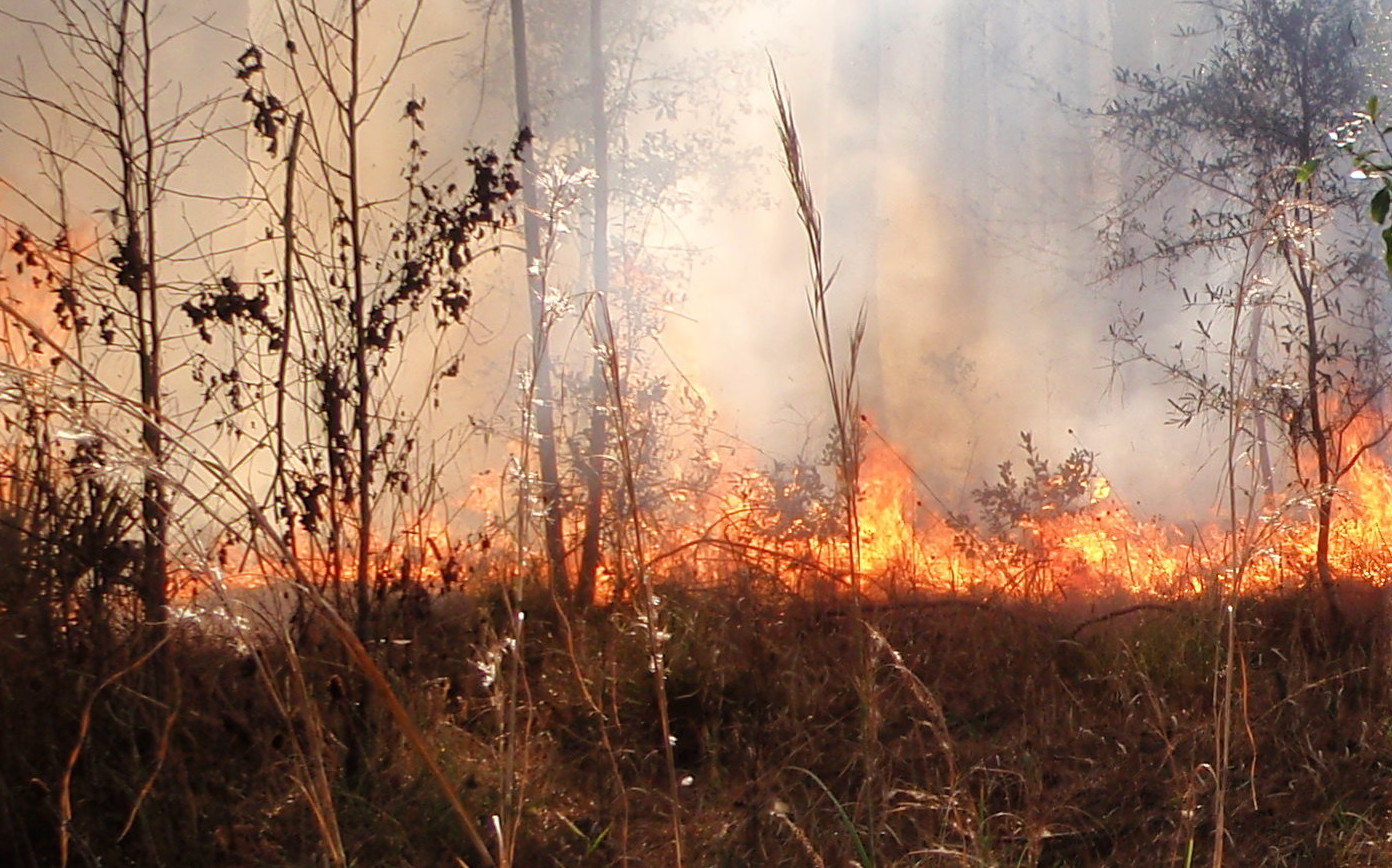"""A """"backing fire"""" doing a good job of clearing built up fuel while leaving unharmed larger vegetation & trees. This is how it should work............"""
