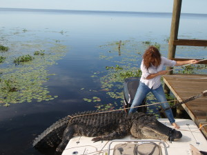 A SUSTAINABLE GATOR HARVEST.......ONE OF THE BENEFITS OF PROTECTING OUR RIVER!!