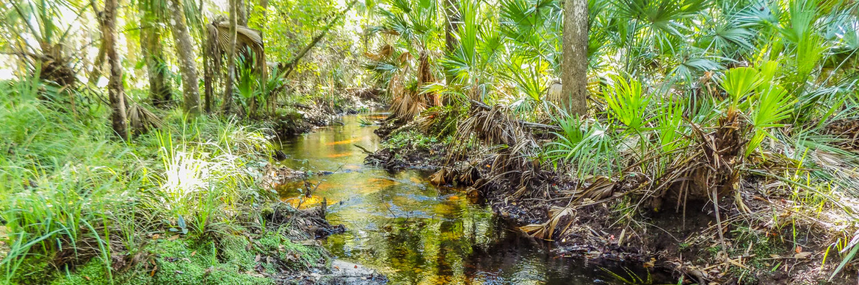 Wetland Preserve LLC